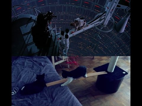 I recreated one of the most inconic scene in Star Wars. With cats.