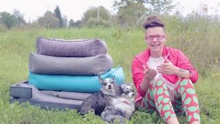 Ищете подарок для собаки?