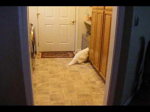Cat Attacks Automatic Cat Litter Box