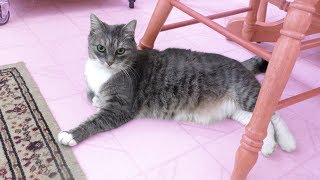 MEET MY CAT LILY!!!