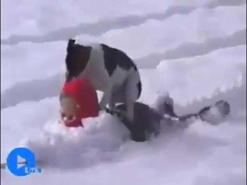 Khi thú cưng nghịch với tuyết