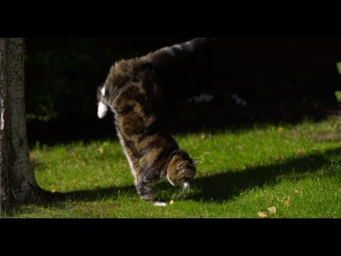 Cat Jumping in Slow Motion – The Slow Mo Guys