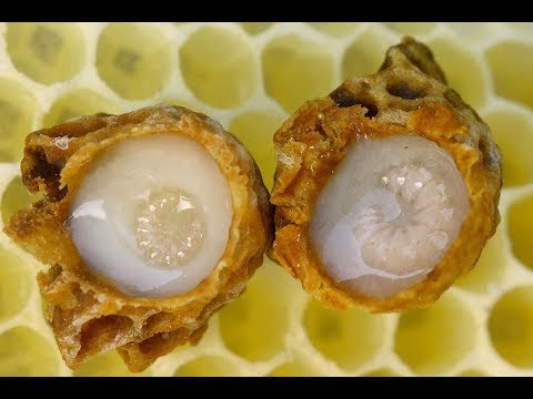 Royal Jelly Extract | Cancer, Immune System, Skin Aging, Menopause, Brain, MCFAs, Lipids, Fat