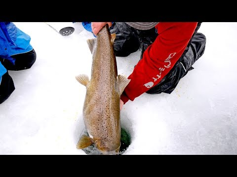 Fishing for Monsters Under the Ice - Thời lượng: 12 phút.