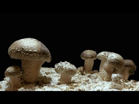 Magic Mushrooms Help Cancer Patients?