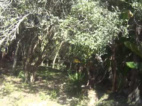 chácara com piscina e riacho em Ibiúna