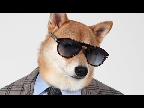 YouTube: Bodhi, el perro modelo que gana US$15 mil mensuales