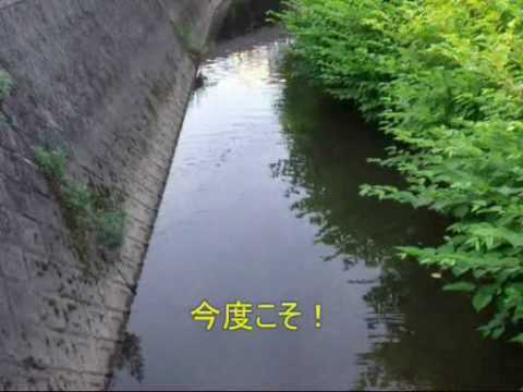 「[釣り]45cmのナマズをゲットした、鯰釣りの様子を撮影したほのぼの動画。」のイメージ
