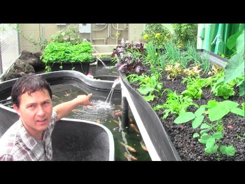 Increase Your Productive Aquaponic Growing Skills Through These Great Growing Tips!