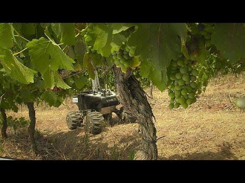 Vinbot: Πώς ένα ρομπότ συμβάλλει στη βελτίωση της ποιότητας του κρασιού στην Ευρώπη – futuris