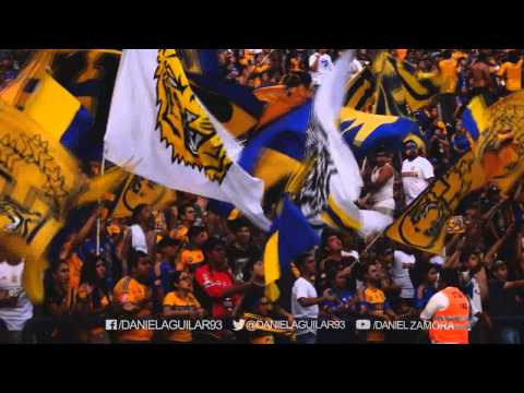 Video - Tigres vs Leones Negros Jornada 9 Nivel de cancha - Libres y Lokos - Tigres - México