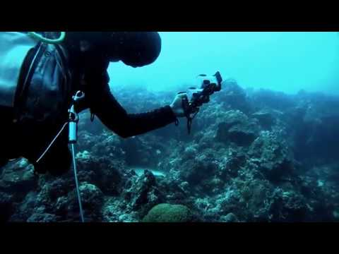 Kamera sportowa SONY FDR-X1000 + Pilot z funkcją podglądu na żywo
