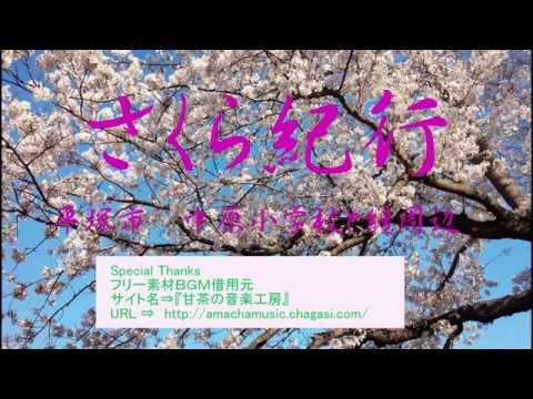 さくら紀行(平塚市 中原小学校、纏周辺)