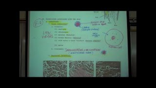 ANATOMY; THE INTEGUMENT; Part 2 By Professor Fink