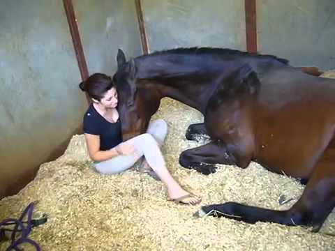 Video Girl and Horse   Great Bond download in MP3, 3GP, MP4, WEBM, AVI, FLV January 2017