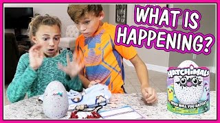 Video WHAT HAPPENS TO OUR HATCHIMAL?   We Are The Davises MP3, 3GP, MP4, WEBM, AVI, FLV Maret 2018