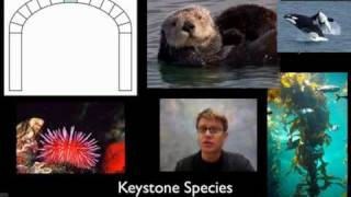 055 - Biodiversity Paul Andersen explains the importance of biodiversity. He starts by describing how biodiversity can be species, ...