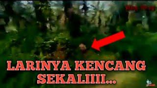 Download Video Kejar makhluk kerdil (Mante ) sampai jatuh kejungkal telungkup.. MP3 3GP MP4