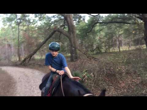 Horseback Riding in Ocala, Florida- New Year's 2017