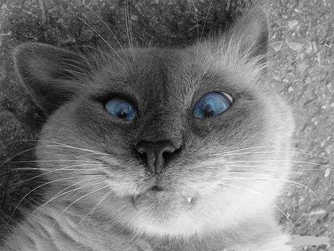 Самые смешные кошки. Забавные кошки. Видео про кошек. - DomaVideo.Ru