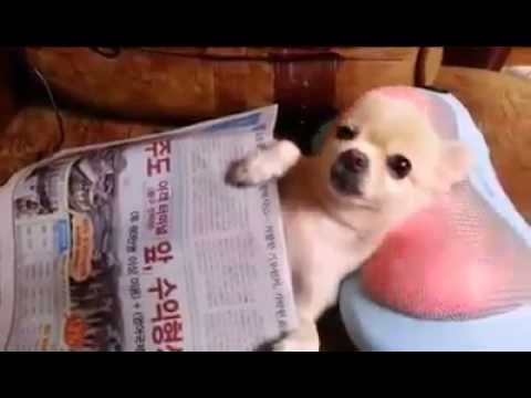 Cool Dog Massage
