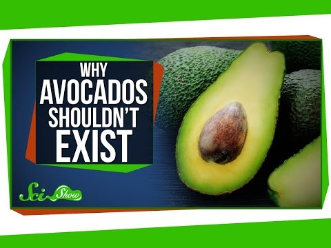 Why Avocados Shouldn t Exist