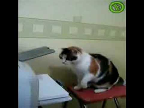 Cat vs. Printer