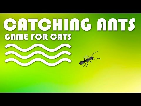 ENTERTAINMENT VIDEO FOR CATS. Cat Game on Screen. Catching Ants.