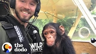 This Pilot Flies with Rescued Baby Chimpanzee for the Sweetest Reason | The Dodo Wild Hearts by The Dodo
