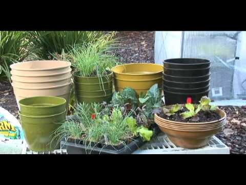 Organic Greenhouse Part 2 Container Gardening