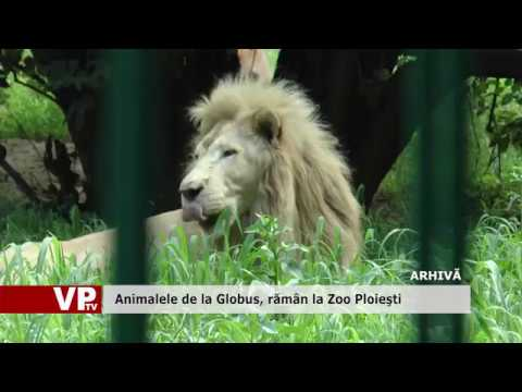 Animalele de la Globus, rămân la Zoo Ploiești