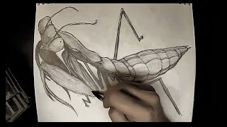 Drawing Time Lapse: Praying Mantis