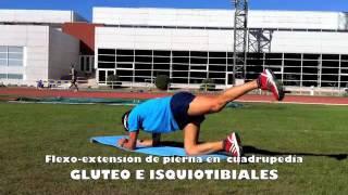 Flexo - extensión de piernas en 4 apoyos