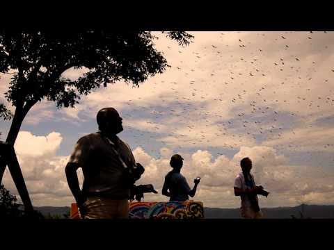 Migración masiva de aves rapaces
