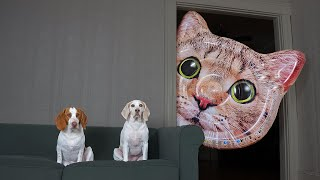 Dogs vs Giant Cat Head Prank: Funny Dogs Maymo & Potpie Pranked by Cats by Maymo