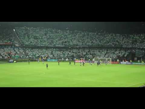 CÁNTICOS LOS DEL SUR   Atlético Nacional 3 - Millonarios 0, Cuartos Liga Águila 2016-II - Los del Sur - Atlético Nacional - Colombia - América del Sur