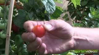 #1292 Gemüse im Topf anpflanzen