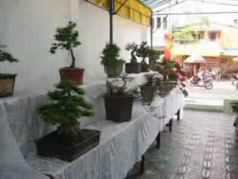 Hội Thi Hoa lan Và Bonsai Tỉnh Trà Vinh lần Thứ III - 2010