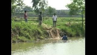 Haryana India  City pictures : Fish farming or Pond Pisciculture in Haryana, India