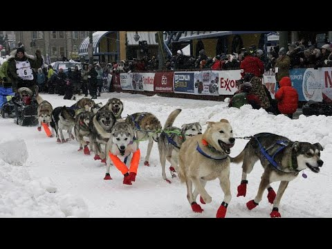 Alaska: 1.600 km - das längste Hundeschlittenrennen der Welt