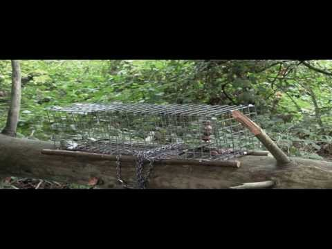 Pest Control with Steve Caple: Trapping