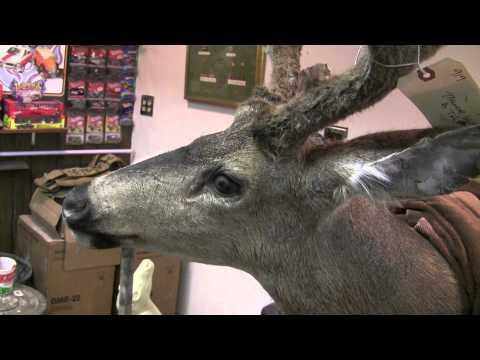 Testa's Taxidermy Tip – Basic Deer Head Finishing