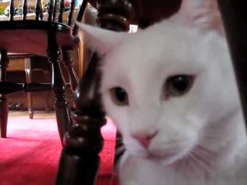 Jupiter The Talking Cat Gives His Confession