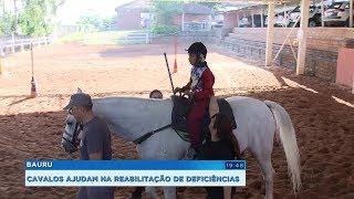 Cavalos da Polícia Militar ajudam na reabilitação de crianças com deficiência