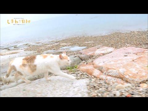 【愛媛県】猫の島 青島