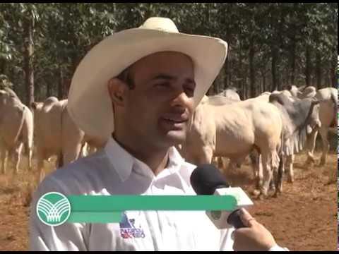 CNA EM CAMPO: Produtores rurais da área da Sudene podem renegociar as dívidas de crédito rural