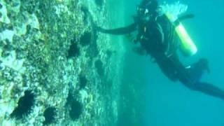 Ulladulla Australia  city photos : Nishan scuba diving in Ulladulla - Australia