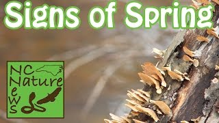 Signs of Spring | Exploring & Herping #15