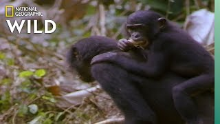 Which Animals Carry Their Babies? | Animal Autofill by Nat Geo WILD