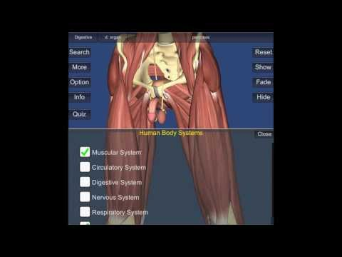 Video of 3D Anatomy